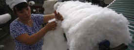 Cotton prices have soared to record highs following a global supply shortage. (Reuters/Stringer/Files)